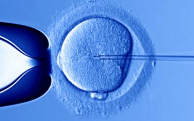 Prima e dopo la nascita: tra desideri e traumi. Attività di Prevenzione e Interventi Precoci (seconda parte)