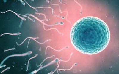 Prima e dopo la nascita: tra desideri e traumi. Attività di Prevenzione e Interventi Precoci (prima parte)