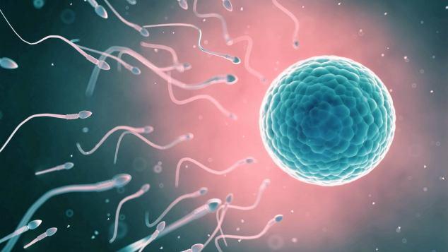 ovulo e spermatozoi