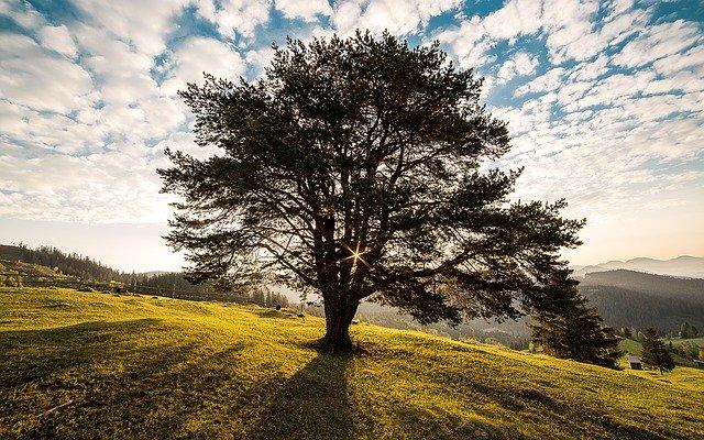 L'insostenibile colpa della felicità e il diritto di realizzarla con le risorse della Bioenergetica
