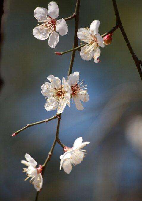 Considerazioni di Primavera, e…..#NOICISIAMO. Di Diana M. Scubla, Psicologa, Psicoterapeuta SIAB